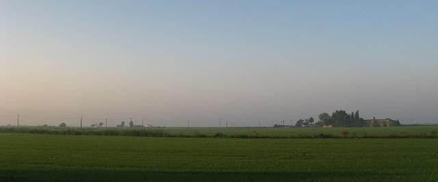 Camps d'arròs dels voltants dels Muntells