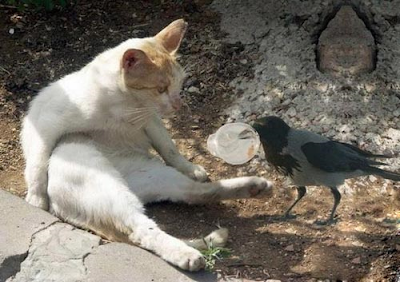 Funny photo, Funny caption, Cat looking at a pigeon with plastic cup in its beak