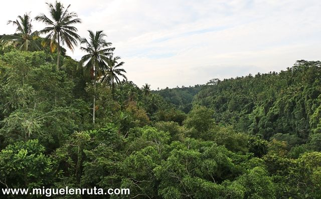 Selva-interior-Bali