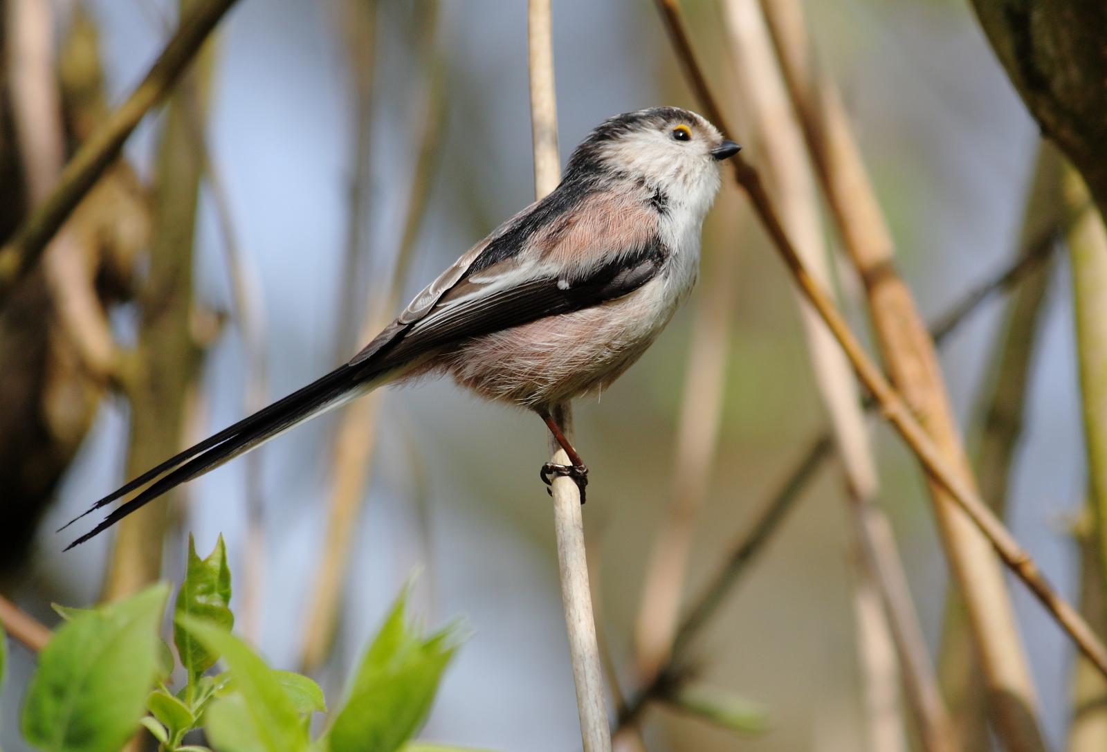 Les oiseaux et autres Animaux de nos jardins et forets ...