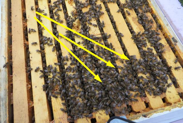 Το μελίσσι φεύγει απο τις ταινίες μεγάλη προσοχή μελισσοκόμοι!!