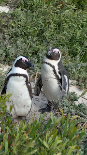 Penguin couple.