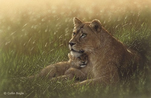 04-Lioness-&-Lion-Cub-Collin-Bogle-Animal-Wildlife-in-Art-www-designstack-co