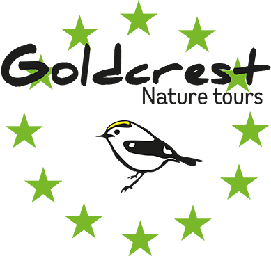 Goldcrest Nature Tours