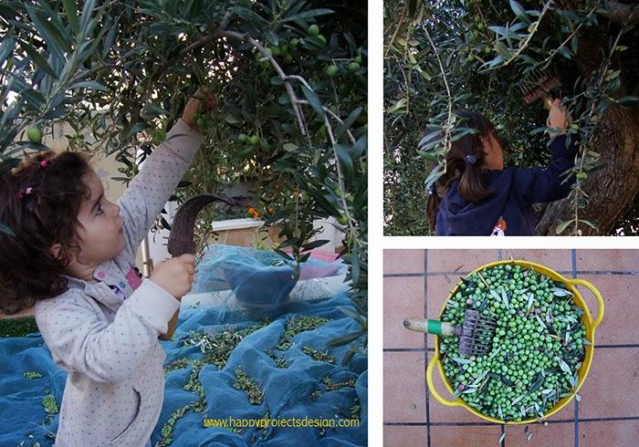 Juegos de Otoño: recogida de olivas