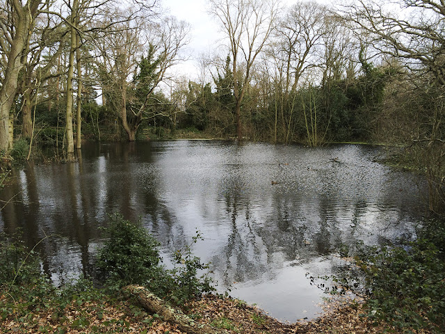 Pond on Hayes Common, 9 February 2014.