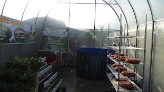 Contoh Tanaman mstech.co.id dalam greenhouse organik