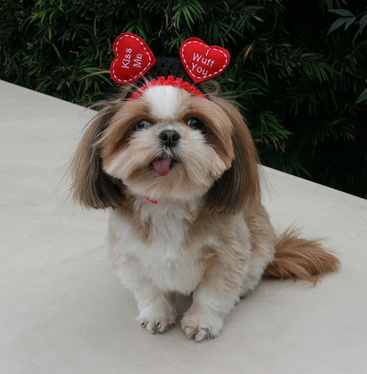 Extremely cute valentines day animals funny and cute animals - Valentines day pictures with puppies ...