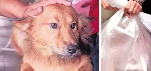 This Precious Pup Drags A Garbage Bag Home From The Dump – Shocked, His Owner Immediately Calls 911