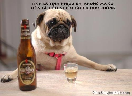 Chú chó uống bia