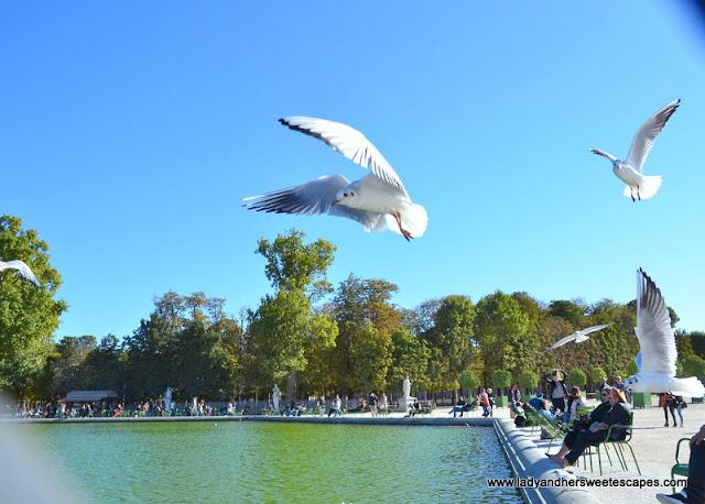 Le Jardin des Tuilerie