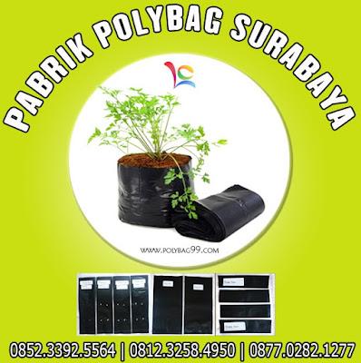 Seledri yaitu suatu tumbuhan yang termasuk ke dalam tumbuhan adas Cara Sukses Budidaya Seledri di Polybag