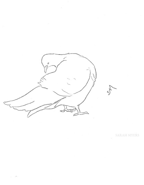 art, drawing, arte, pigeon, dove, sarah, myers, bird, sketch, minimal, line, contemporary, simple, modern, animal, charcoal, line-drawing, preening, feathers