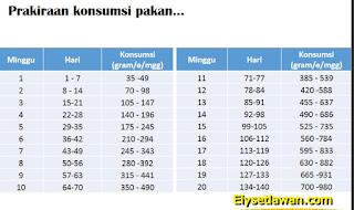 tabel konsumsi pakan ayam kub