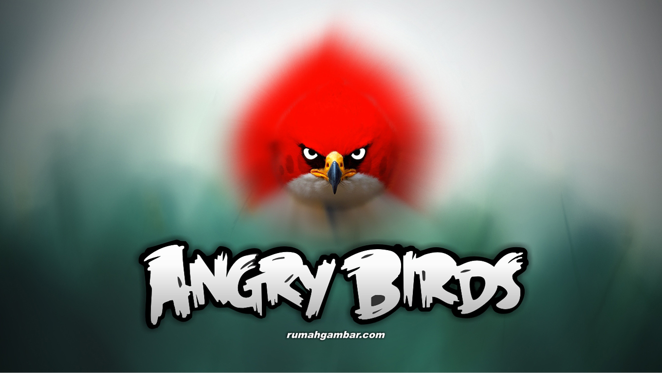3D HD WALLPAPERS: ANGRY BIRDS WALLPAPERS