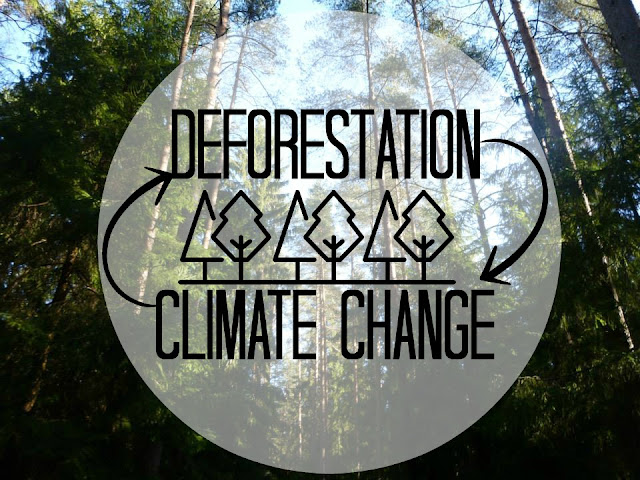 deforestation climate change