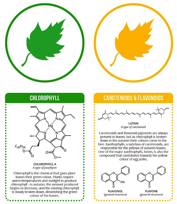 Chlorophylls and Carotenoids