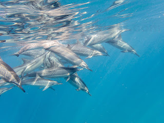 http://www.tropicallight.com/water/dolphins/10jan17dolphins/10jan17dolphins.html