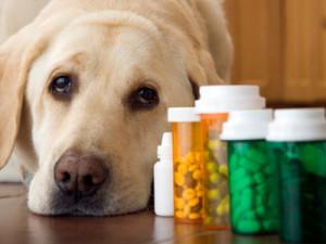 veterinaria online sindrome serotoninergico en perros