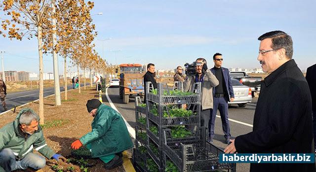 DİYARBAKIR-Diyarbakır Büyükşehir Belediye Başkan Vekili Cumali Atilla, Kamışlı (Qamışlo) Bulvarı'nda devam eden 50 bin adet mevsimlik çiçeğin dikim çalışmalarını yerinde inceledi.