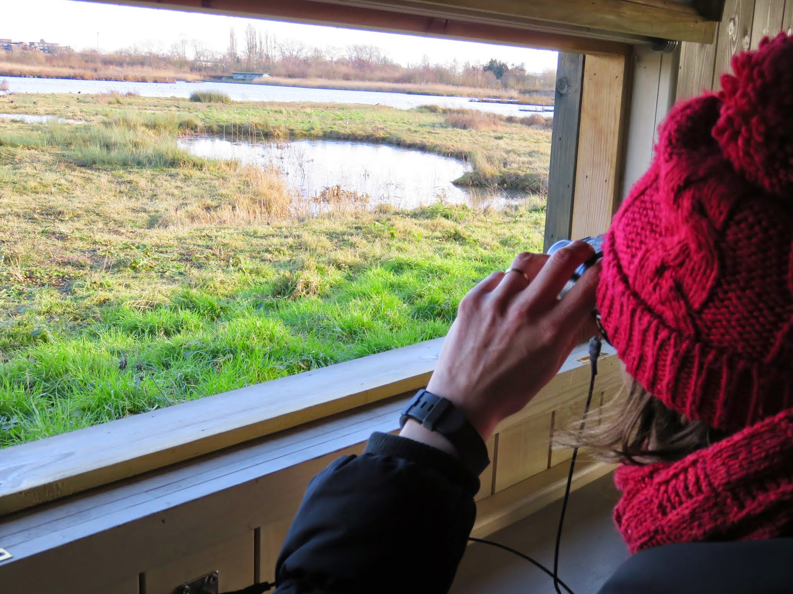 Birdwatching from a hide at the Wildfowl and Wetlands Trust London Sanctuary