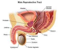 cara mengobati kanker prostat