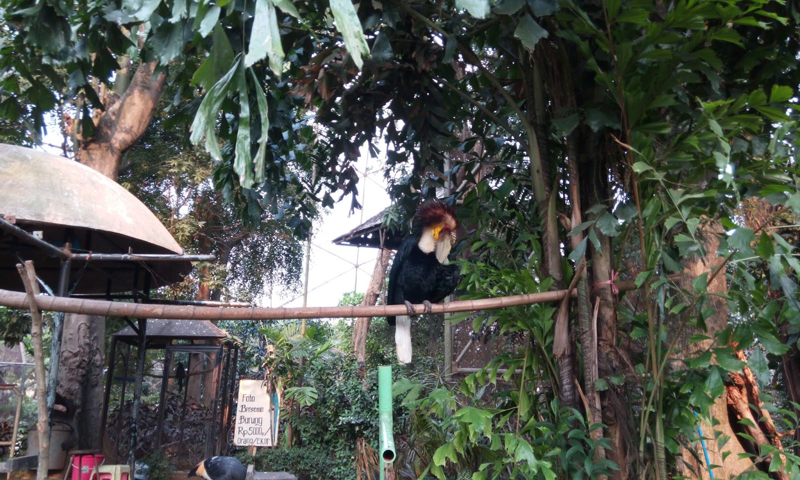 Acaranya Jalan Jalan Taman Burung TMII Jakarta