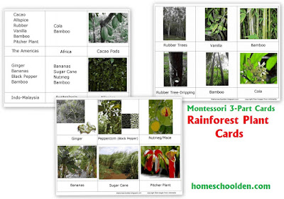 http://homeschoolden.com/2016/01/26/plants-of-the-rain-forest-activity-with-free-rain-forest-plant-cards/