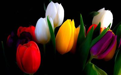 colourfull-roses-flowers-for-gift-pics