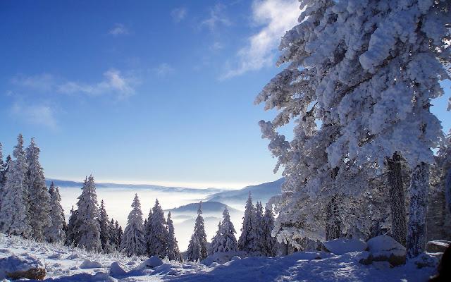 Bomen, bergen en sneeuw