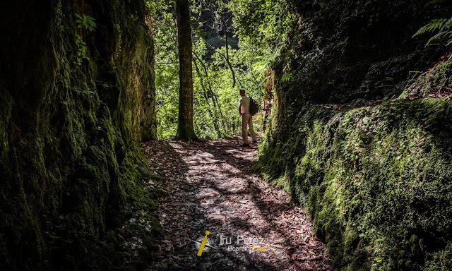 Naturaleza en un barranco de Madeira