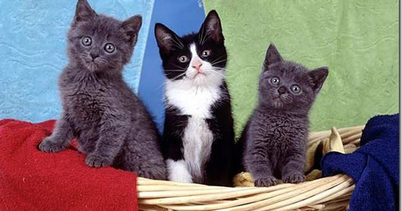 Foto Kucing Lucu Gambar Kualitas Hd Download Foto Fb Hd