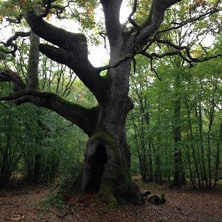 photo du chêne des maître sonneurs