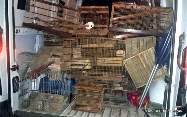 Homem é detido com 94 aves silvestres criadas ilegalmente em Goiana