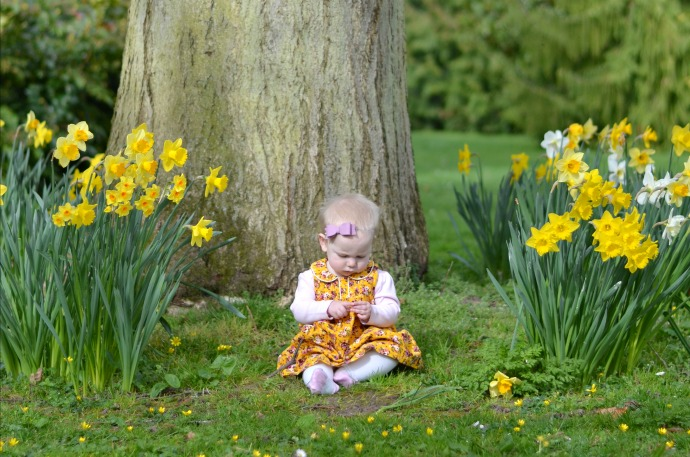 spring photography, daffodil photos, quex gardens