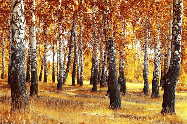 Autumn Inspired Photographic Wall Murals