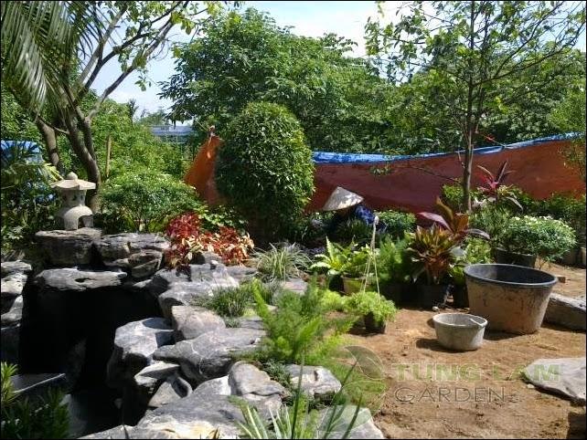 thiết kế hồ cá Koi, thi công hồ cá koi, hồ cá trong sân vườn nhiệt đới