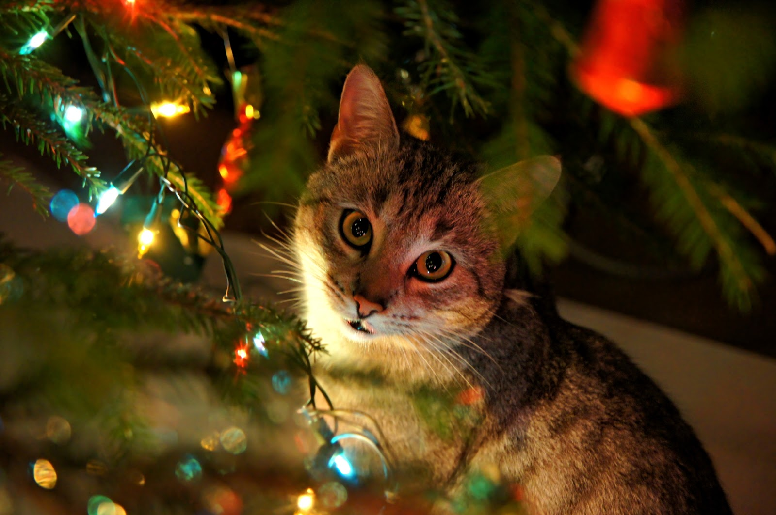 alternatives are using twine or ribbon to tie them to the tree its also a good idea to not have very small ornaments that can be easily ingested - Are Christmas Trees Poisonous To Cats