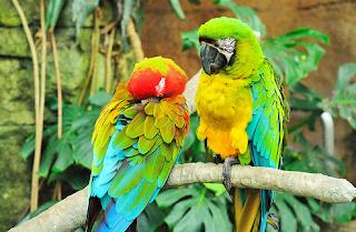 hewan terpintar dan tercerdas di dunia - burung kakatua