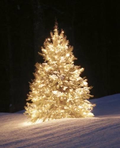 http://4.bp.blogspot.com/-X-hwTSJQJC0/UNN32RyJF1I/AAAAAAAAAVU/F5XRkVy9s5k/s1600/Albero-di-Natale.jpg
