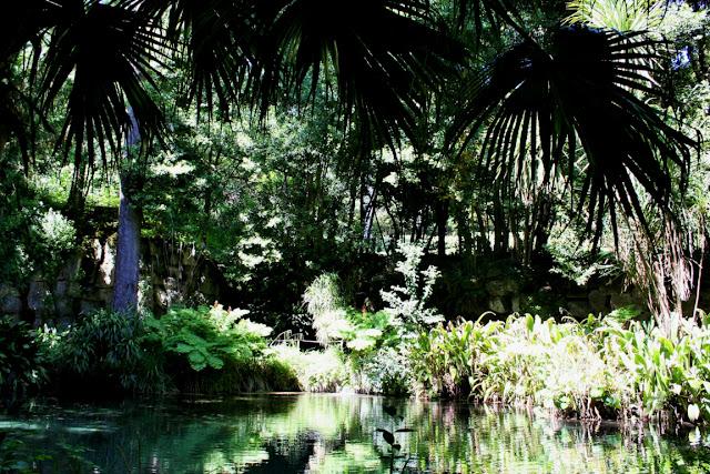 acqua, lago, alberi, vegetazione