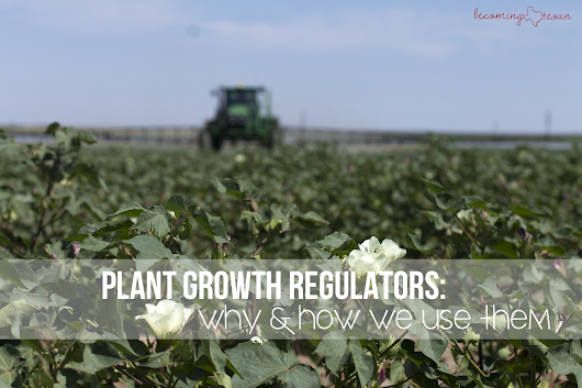 Plant Growth Regulators: Why & How We Use Them