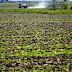 Argentina está à espera de um milagre e 50% do plantio de verão está ameaçado, aponta consultor