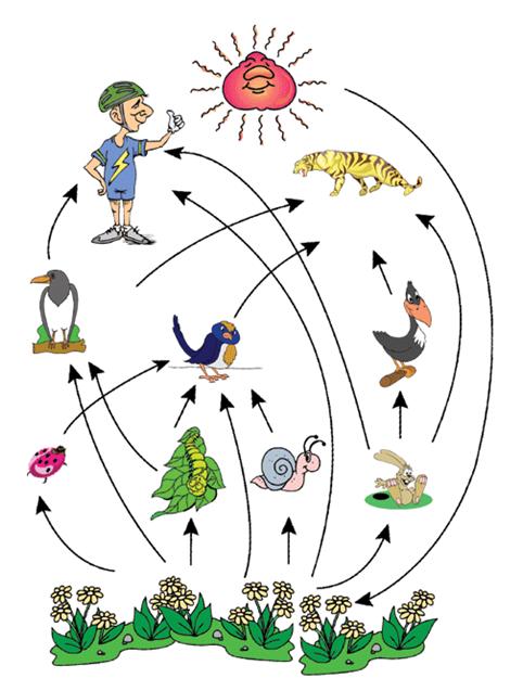 Pengertian Jaring Jaring Kehidupan : pengertian, jaring, kehidupan, Cerdas:, Rantai, Makanan,, Jarring-jaring, Piramida, Makanan