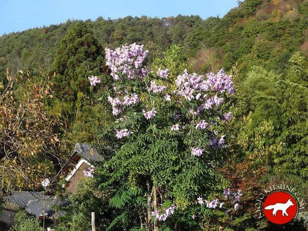 paysage de campagne à Kyoto au Japon