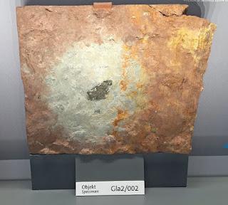 Újabb fosszilis meteorit