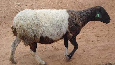 SAM 2093%2B %2BCopy - Ufugaji katika shamba la Rushu Ranchi Kisarawe