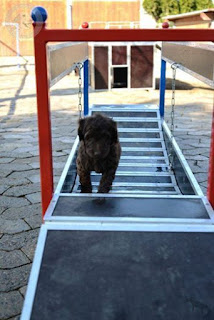 exercício de fisioterapia para cães