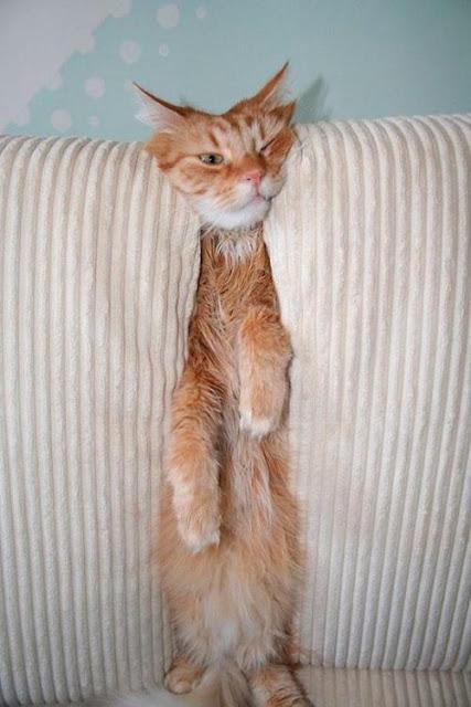 22 kiểu ngớ ngẩn hết phần thiên hạ của các boss chó mèo