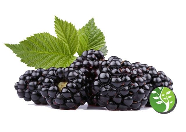 Las frambuesas negras pueden reducir el riesgo de desarrollar cáncer oral